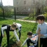 «Наше дерево»